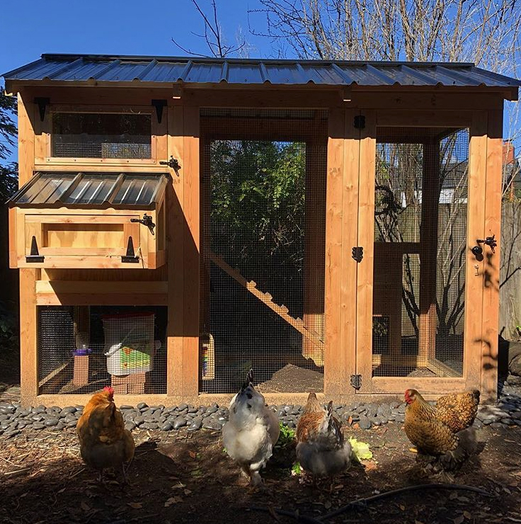 Carolina Coops - California Coop installed for a small flock of four in California